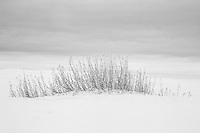 Little Bluestem grasses in White Sands National Monument, New Mexico, USA