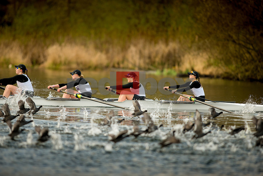 The University of Washington crew team hosts the 2015 Husky Open on April 4, 2015. (Photography by Scott Eklund/Red Box Pictures)