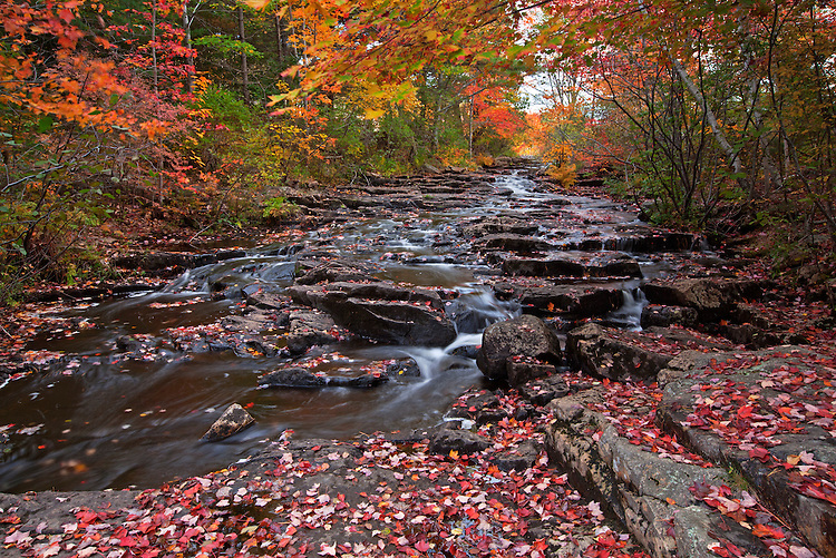 Colorful autumn leaves surround the cascades of Duck Brook in Acadia National Park, Maine, USA