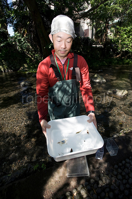 A volunteer shows some of the aquatic life that has returned to the Genbe River  in Mishima, Shizuoka Prefecture Japan on 02 Oct. 2012.  Photographer: Robert Gilhooly
