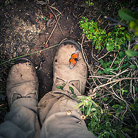 Walking through the Haghier Mountains, a butterfly decided to take a rest on my boot. The Glass-Tip Acraea (Acraea neobule socotrana) is easily distinguished from all other species by the transparent wingends. Socotra is home to more than a thousand plant and animal species found nowhere else on Earth. Nevertheless, the effects of climate change and the increasing impact of the human beings are threatening this delicate ecosystem.