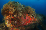 Telephone Pole Reef, Green Island -- Colorful soft coral growth on the sunken telephone poles of this artificial reef.