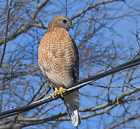 REST STOP<br />