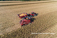 63801-12216 Harvesting corn and unloading into grain cart in fall-aerial  Marion Co. IL