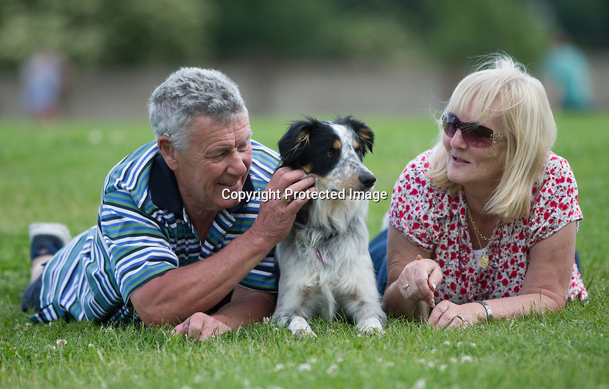 """04/07/15<br /> <br /> John (67) and Susan (62) Martin photographed with Yumi, yesterday at Colliefest, in Ashbourne, Derbyshire.<br /> <br /> Full story here: http://www.fstoppress.com/articles/hermaphrodite-dog/<br /> <br /> The new owners of this rescued one-year-old Border Collie were stunned when their vets discovered that their new dog was neither male nor female, but both.<br /> <br /> John and Susan Martin picked up Yumi, a healthy young dog, from Protecting Preloved Border Collies in May. """"Soon after we got her home she developed an infection in her 'lady-bits'"""" said John.<br /> <br /> """"They feared she had Pyometra - an infection of the uterus which can be fatal in dogs if not caught quickly"""" he added.<br /> <br /> Their local vets in Hull treated her with antibiotics and anti inflammatory drugs.<br /> <br /> When she didn't seem to be getting any better they took a closer look and noticed what they thought was a bone growing out of her vulva. Yumi was referred to the Small Animal Teaching Hospital in Liverpool who identified 'the bone' as growing male genitalia.<br /> <br /> Yumi had surgery to remove the growth. Then a second operation to spay her revealed what vets first believed to be tumours on her ovaries. But these tumours were discovered to be testicle tissue. They were also removed successfully. The vets explained that although Yumi was 'intersex' (or hermophrodite) she was more female than male.<br /> <br /> All Rights Reserved: F Stop Press Ltd. +44(0)1335 418629   www.fstoppress.com."""