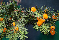 Taxus baccata 'Lutea' fruits berries yellow orange