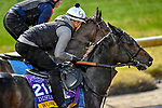 November 1, 2018: Wow Cat (CHI), trained by Chad C. Brown, exercises in preparation for the Breeders' Cup Distaff at Churchill Downs on November 1, 2018 in Louisville, Kentucky. Michael McInally/Eclipse Sportswire/CSM
