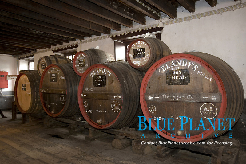 barrels in the Old Blandy wine lodge, Funchal's wine Museum house, Funchal, Madeira Island, Portugal, Atlantic Ocean, Portuguese Territory of Northern Africa
