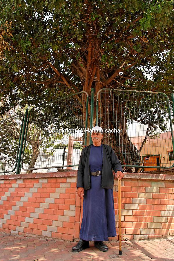 Israel, the Upper Galilee. A Druze elder by the Carob tree in Kisra