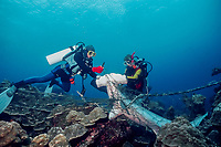divers cut free carcasses of scalloped hammerhead sharks, Sphyrna lewini, killed by shark net illegally set in Galapagos Marine Reserve, Wolf (Wenman) Island, Galapagos Islands, Ecuador, East Pacific Ocean