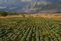 ALBANIA: herbs