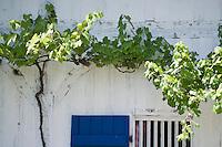 Europe/France/Aquitaine/40/Landes/ Marquèze: Ecomusée de Marquèze, l'Ecomusée de la Grande Lande. Maison Landaise