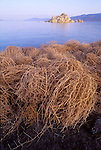 Tumble weed along the desert shore, a tufa formation emerging from the lake, early evening, Pyramid Lake, Nev.