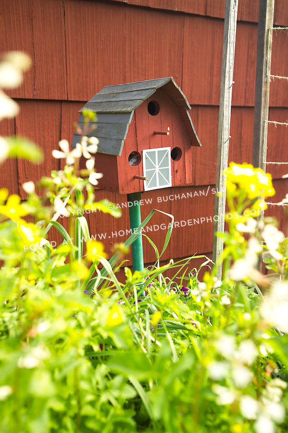 A red painted birdhouse sits against matching red painted shingles on the side of a garage or house, seen poking up from a mixed herb and vegetable garden in this south facing organic garden in Seattle.  Offering shelter and water for birds in a garden increases the likelihood they'll stay and help manage insect populations, thus reducing the need for chemical sprays.