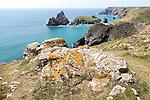Coastal scenery, Kynance Cove, Lizard peninsula, Cornwall, England, UK -  Gull Rock and The Bishop