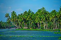 Backwaters near Alappuzha (Alleppey), Kerala, India