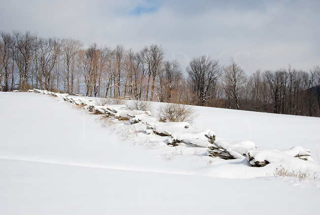 A rail fence smothered in new snow, heading to the treeline that marks out the fields. Blue Knob State Park, Bedford County, Pennsylvania.