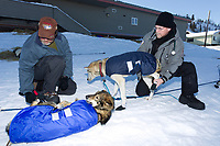 Veterinarian Mike Hicks examines Bruce Lintons dogs at the Shageluk village checkpoint during the 2011 Iditarod race.