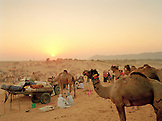 INDIA, Rajasthan, men and camels at the Pushkar Camel Fair