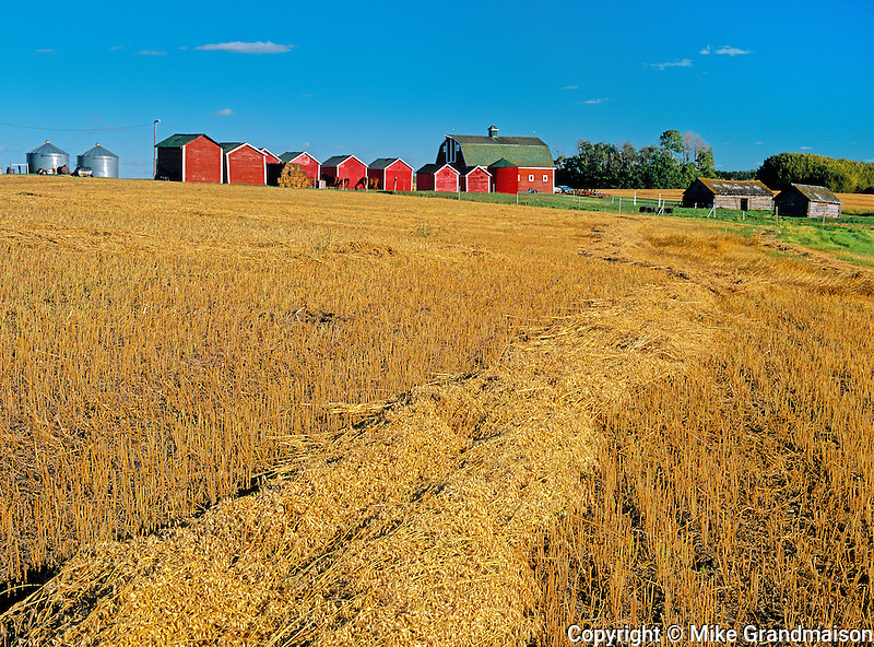 Red graineries and oats<br /> Turtleford<br /> Saskatchewan<br /> Canada
