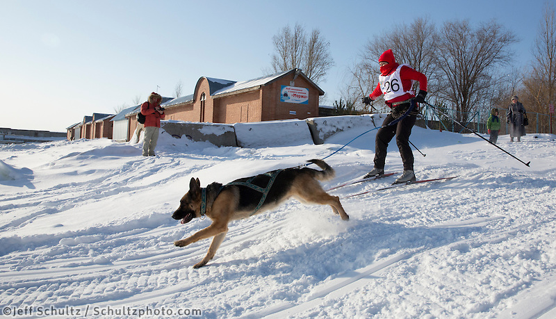 Skijoring during the Exhibition Ceremonial start day for the Volga Quest Sled Dog Race including skijoring and smaller sled dog races.  Volga River waterfront park.  Togliatti, Russia    Saturday 25 January 2014