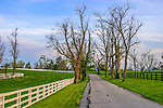 A Fence Line and Country Lane Near Lexington Kentucky, USA, Horse Country
