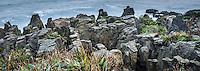 Pancake rocks in Punakaiki, Paparoa National Park, West Coast, Buller Region, South Island, New Zealand, NZ