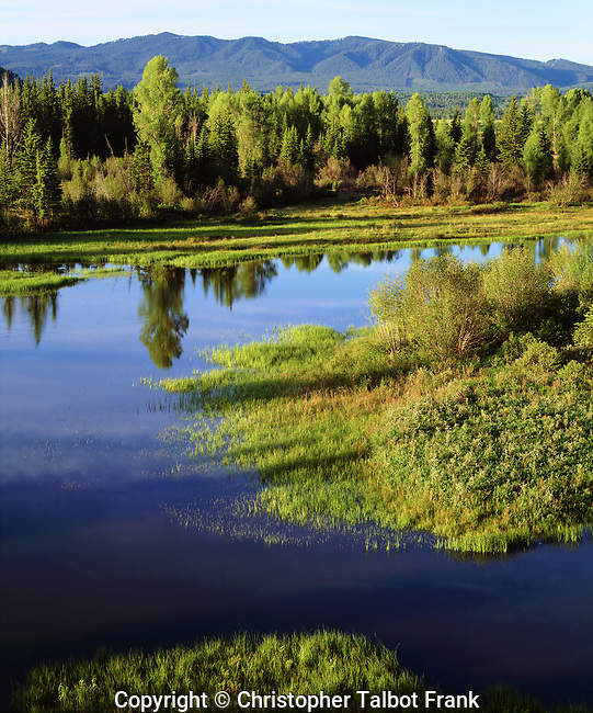 USA; Wyoming, Grand Teton National Park.  A lush Meadow in the Grand Tetons