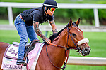 LOUISVILLE, KENTUCKY - MAY 01: Bellafina, trained by Simon Callaghan, exercises in preparation for the Kentucky Oaks at Churchill Downs in Louisville, Kentucky on May 1, 2019. John Voorhees/Eclipse Sportswire/CSM