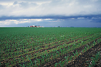 storm clouds forming over farm with corn field in foreground. weather, rain, ominous. Dyersville Iowa.