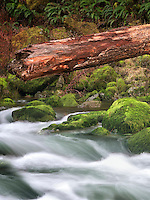Quartzville Creek with moss and downded log. Quartzville Creek Wild and Scenic River. Oregon