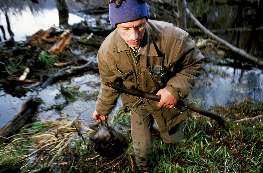 Park ranger Pablo Kunzle drags a trapped adolescent beaver to the shore. Suspecting that beavers were active here, Kunzle had come weeks earlier and ripped a small leak in the dam with an ice axe. It had been repaired, proving to him that the colony was active.