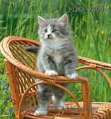 Marek, ANIMALS, REALISTISCHE TIERE, ANIMALES REALISTICOS, cats, photos+++++,PLMP2600,#a#