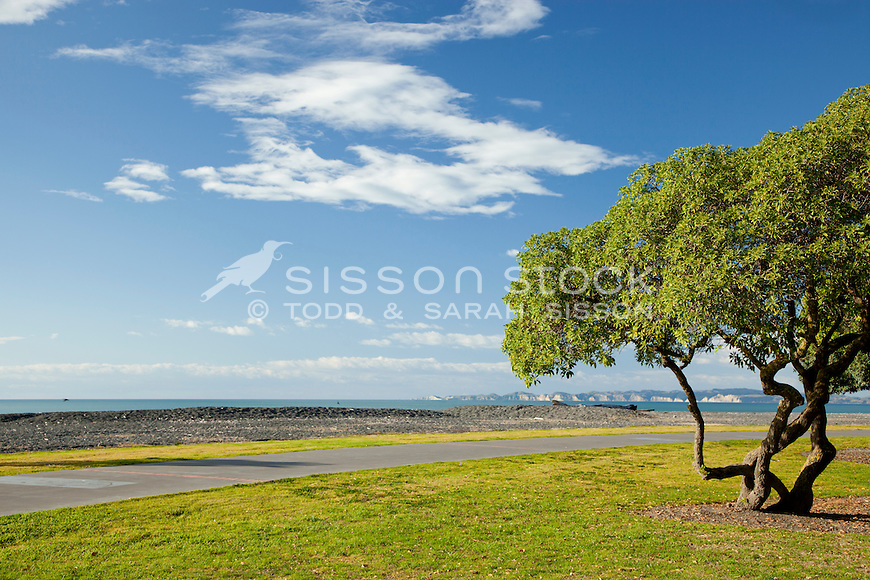 Ngaio tree on Napier foreshore.  Distant view of Cape Kidnappers.