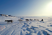 Bill Cotter on GolovinBay arrives at Golovin checkpt.       Iditarod Sled Dog Race/ Alaska