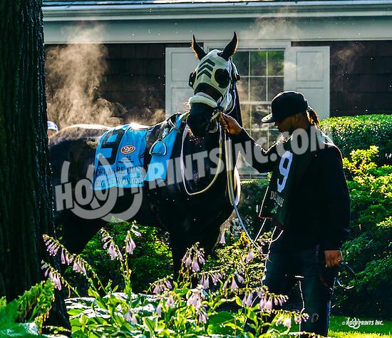 Eighth Wonder before The Delaware Oaks (gr 3) at Delaware Park on 7/9/16