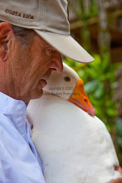 "Author Paul Theroux at his office on the North Shore of the island of Oahu, Hawaii. Pictured here is Paul with one of his pet geese, ""Willie"""