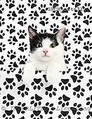 Xavier, ANIMALS, cats, photos, SPCHCATS712,#A# Katzen, gatos