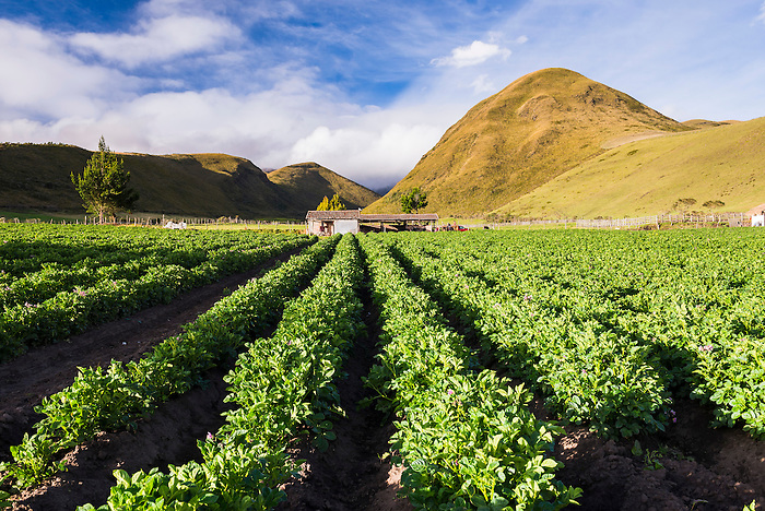 Farmland at the base of Illiniza Norte Volcano, Pichincha Province, Ecuador