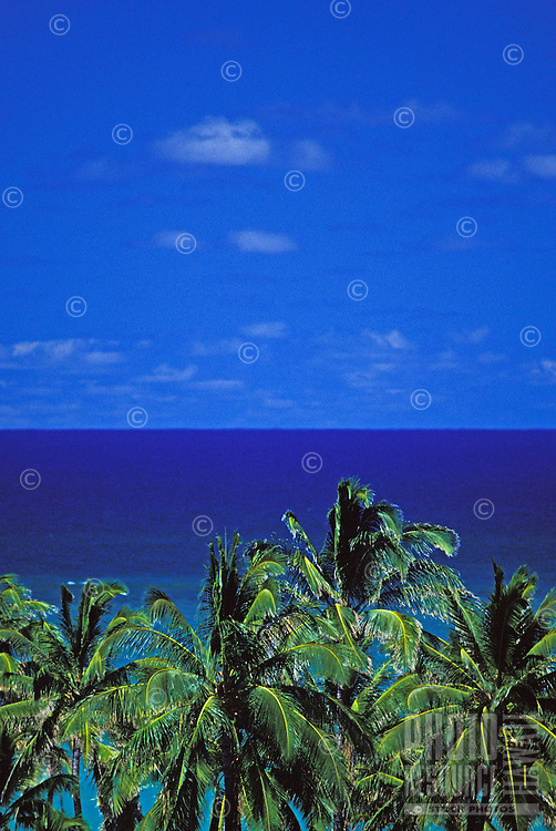 View of blue sky & ocean with palm trees in foreground from Lanikai ridge