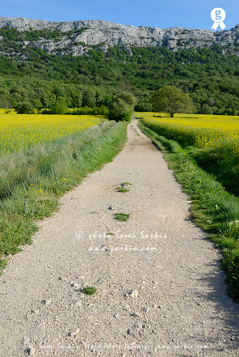 France, Provence, path leading to the Sainte-Baume Mountain (Licence this image exclusively with Getty: http://www.gettyimages.com/detail/sb10061763m-001 )