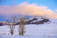 Yellowstone National Park, Wyoming: Colorful sunset clouds over Druid Peak and stand of cottonwoods in Lamar Valley