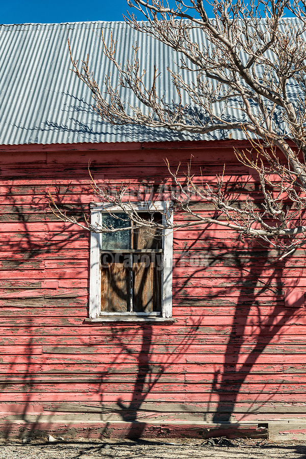 Bare tree and window in red wall, town of Hazen in the Lahoten Valley along the old Lincoln Highway, Nevada