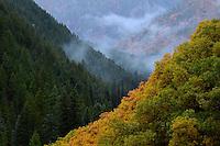 Alpine Canyon.  Wasatch Mountains, Utah.  September 2012.