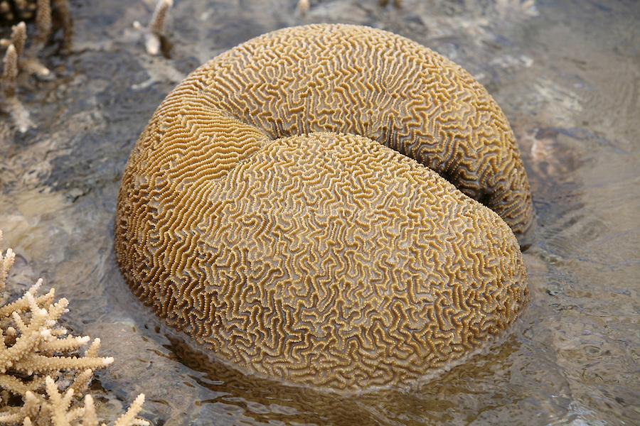Barriere de corail emergee pendant les grandes marees. Ce phenomene est  observe deux fois dans l'annee.Les Mahorais en profitent pour pecher a pied avec des consequences desastreuses pour la barriere de corail