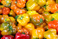 Various colored bell peppers at Lake Oswego Farmers Market. Oregon