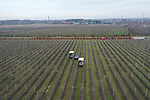 Foto: VidiPhoto<br /> <br /> ECHTELD &ndash; Een team van twaalf Nederlandse en Poolse snoeiers is dinsdag met een drietal ultramoderne hoogwerkers aan de slag om de toppen van de kanzi appelbomen bij fruitteler Berend-Jan van Westreenen uit Echteld, bij te snoeien. Het toppen snoeien is vakwerk en mag alleen door ervaren personeel worden gedaan. Het gaat om een enorme klus van in totaal 75 ha. fruitbomen, waarmee al in november wordt begonnen. De toppen zijn volgende week gereed en dan begint het snoeiwerk aan de onderste takken. Van Westreenen is een van de grootste fruittelers van ons land.