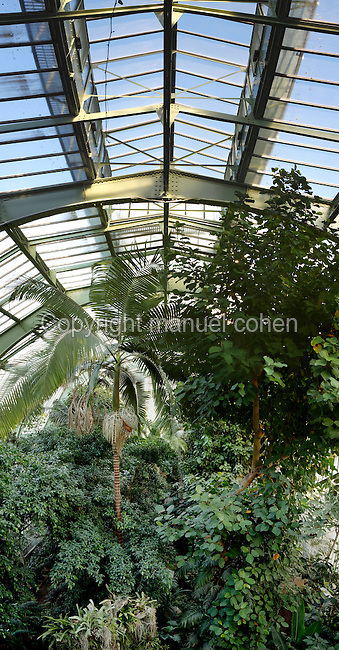 Tropical Rainforest Glasshouse (formerly Le Jardin d'Hiver), 1936, Rene Berger, Jardin des Plantes, Museum National d'Histoire Naturelle, Paris, France. Low angle view of the luxuriant vegetation including a Howea forsteriana palm tree against the metal roof structure.