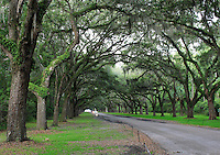 Stock photo: oak tree lined road of wormsloe plantation in Savannah Georgia USA.