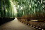 Arashiyama bamboo forest path, beautiful dreamy morning scenery in Kyoto, Japan. Image © MaximImages, License at https://www.maximimages.com